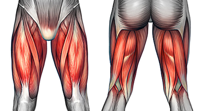 Thigh Pain & Injuries - Symptoms, Causes and Treatment
